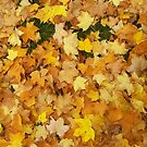 Autumn Leaves in Colour by Charlotte Slade