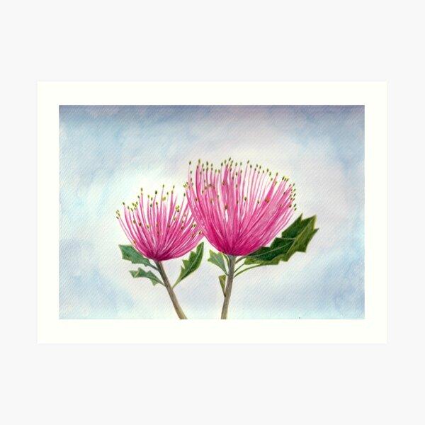 Matchstick Banksia Art Print