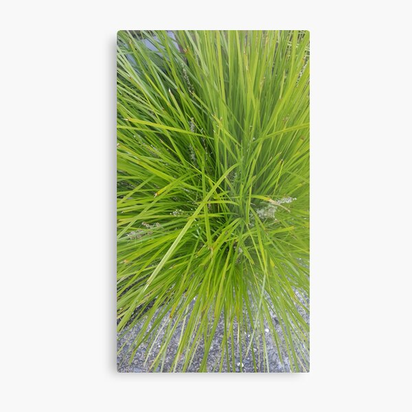 Green grassy shock Metal Print