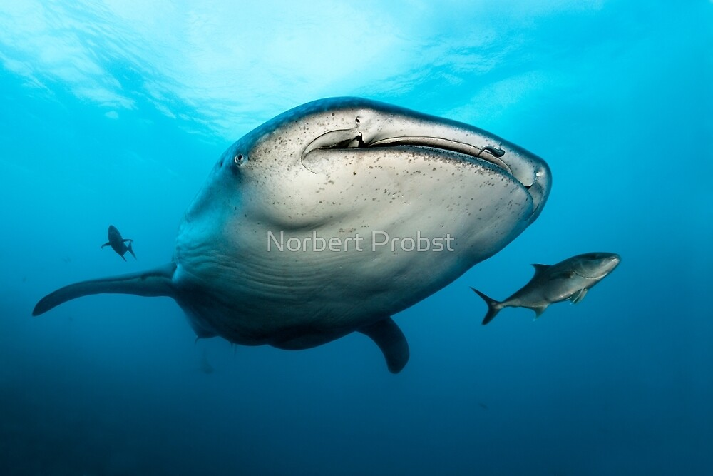 Think Big by Norbert Probst