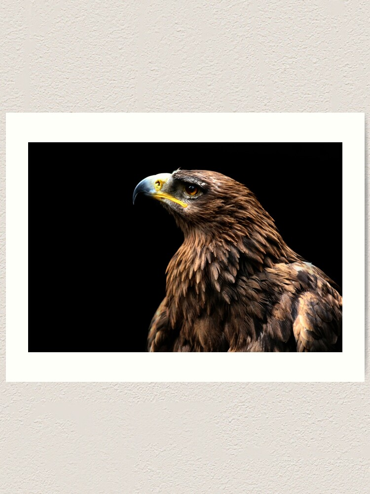 Tawny Eagle Art Print By Yampimon Redbubble