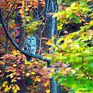 Barred Owl and Foliage by Caleb Ward