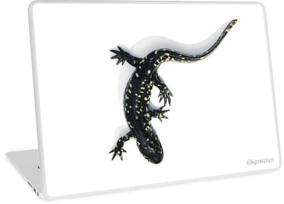 Spotted Salamander by UffdaGreg