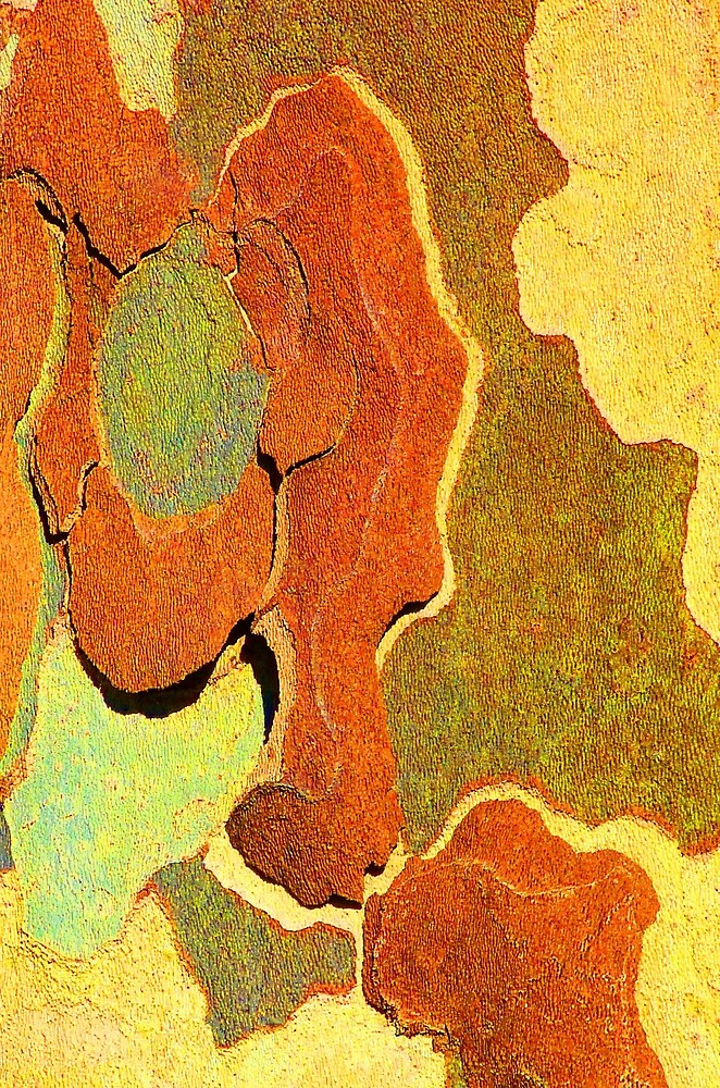 Winter London Plane Tree Abstract 6 by Margaret Saheed