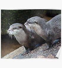 Otter Alert Poster