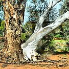 Genetic anomaly: Gum Tree Brothers by George Petrovsky