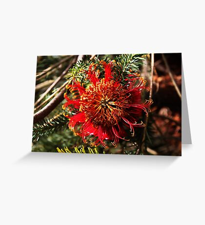 Hakea Bakeriana Greeting Card
