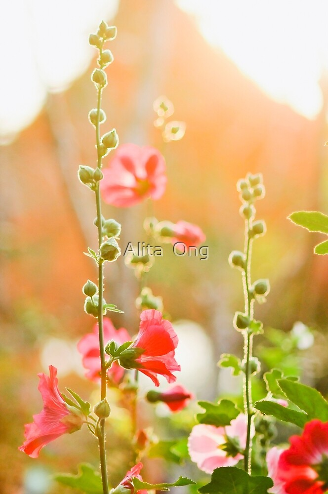 Sunray II by Alita  Ong