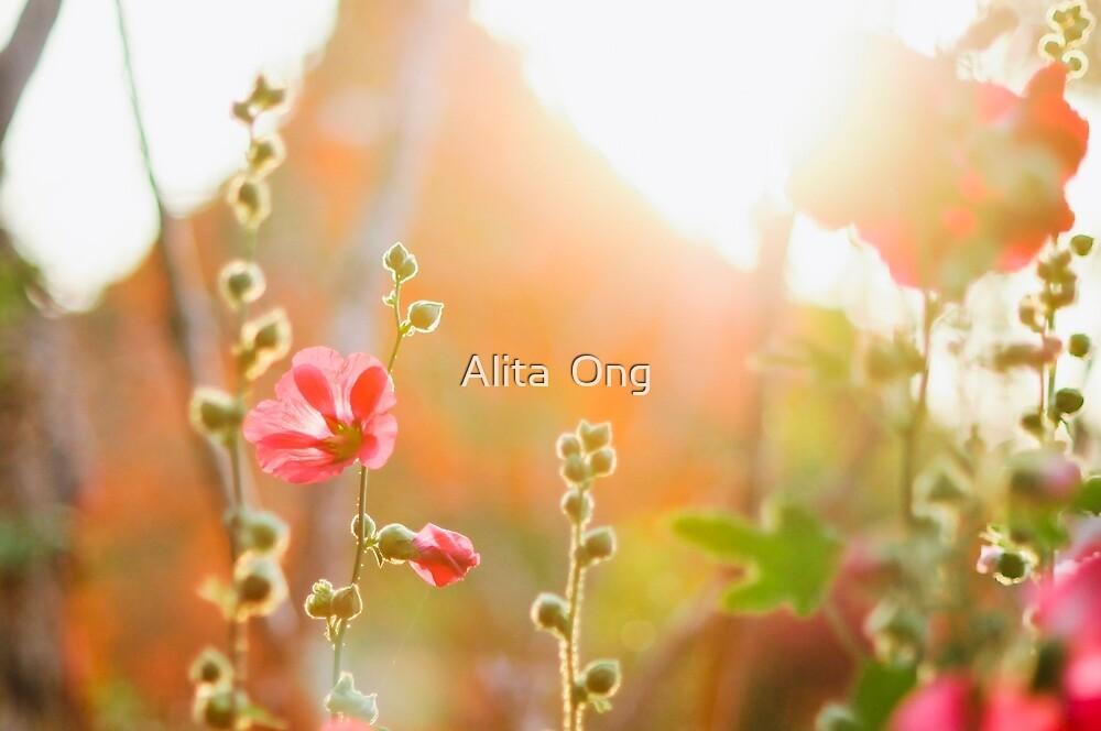Sunray by Alita  Ong