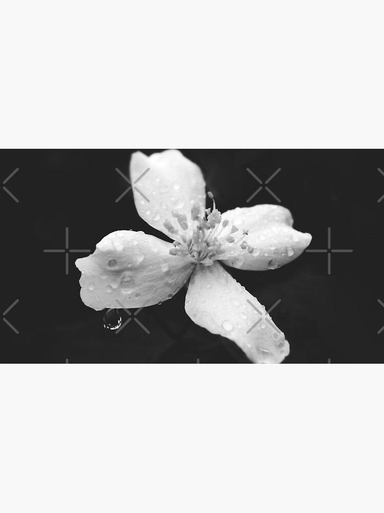 Black and white nature blossom flower close-up by by-jwp