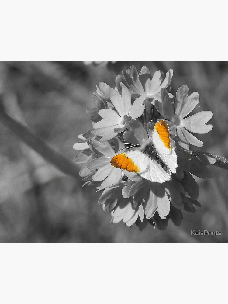 Orange tip butterfly  by KaisPrints