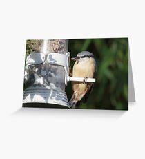 Nuthatch (Sitta europaea) using a garden feeder. Greeting Card
