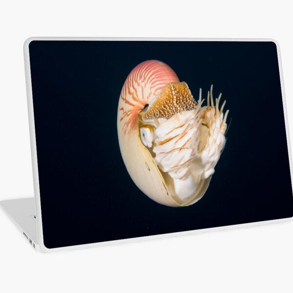 Chambered Nautilus Laptop Skin