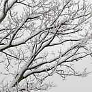 Snowy Branches by Phoebetales