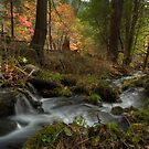 Whispers of Autumn by Sue  Cullumber