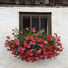 Farm Window 2 by Christine  Wilson