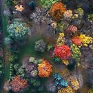 Fall colours from above by Oleksii Rybakov