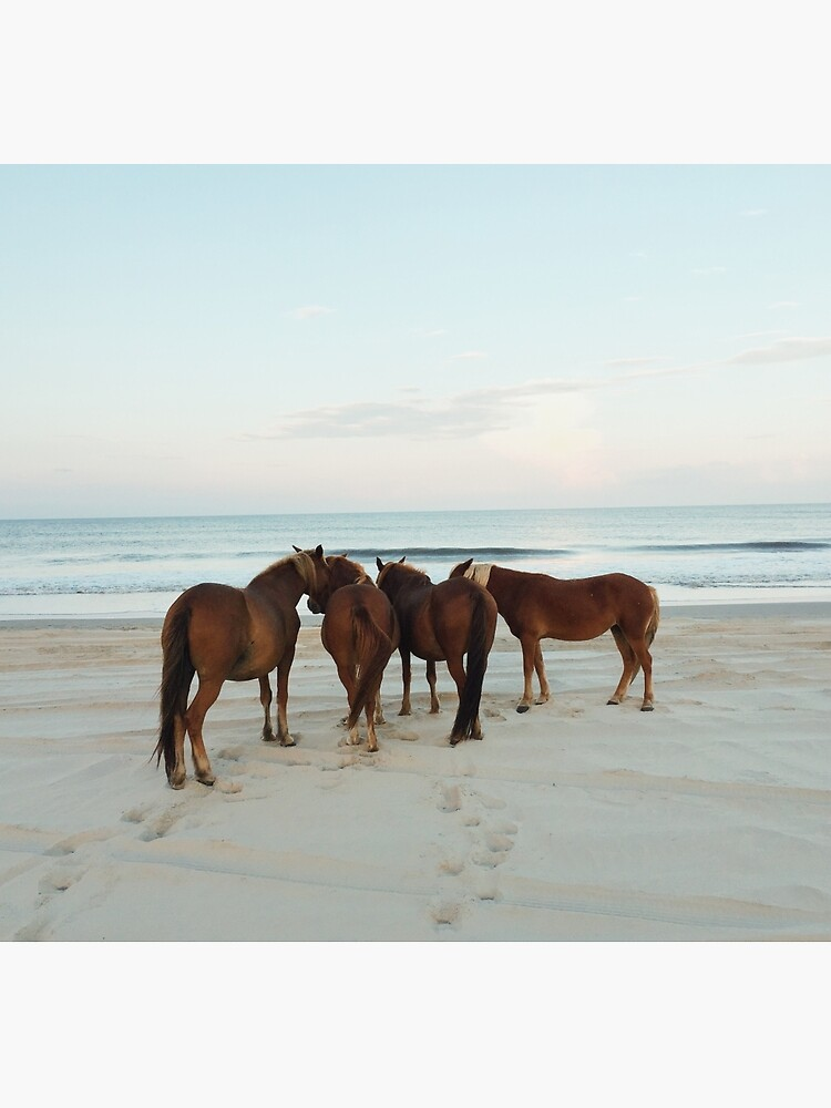 Coastal Horse Meeting by kevinruss