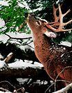 Taste O'wintergreen by Miles Moody