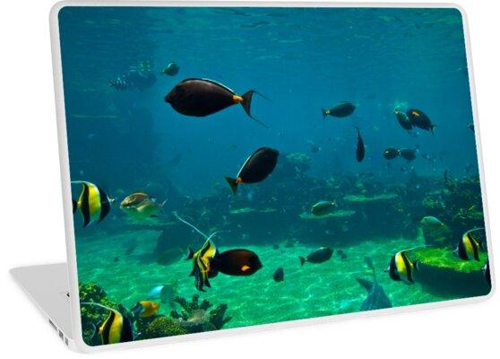 Fish Tank by Ian Fraser