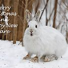 Snowshoe hare Christmas by Jim Cumming