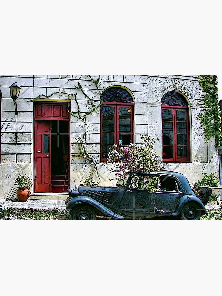 Vintage Planter by photorolandi