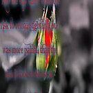 Anais Nin Quote by Littlehalfwings