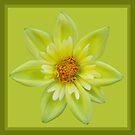 Tufted Yellow Dahlia  by Betty Mackey