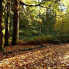 Fall in Olympic National Park by Elaine Bawden