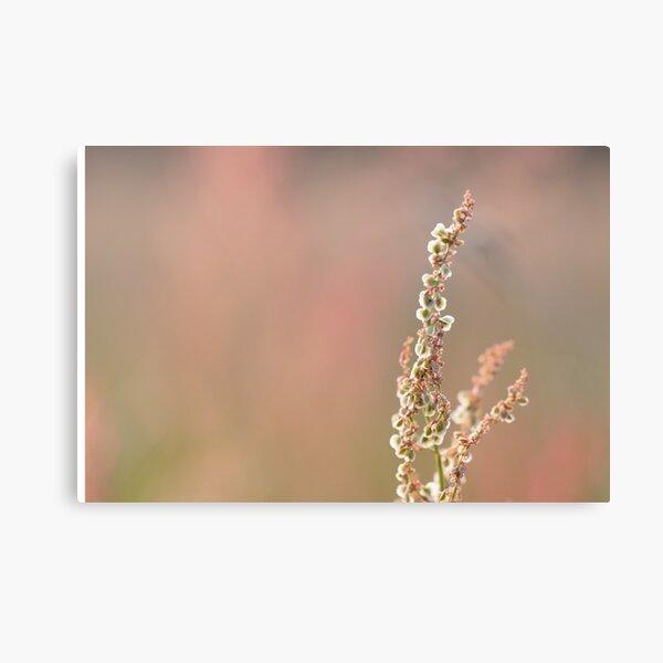 Wild flower on a summer evening Canvas Print