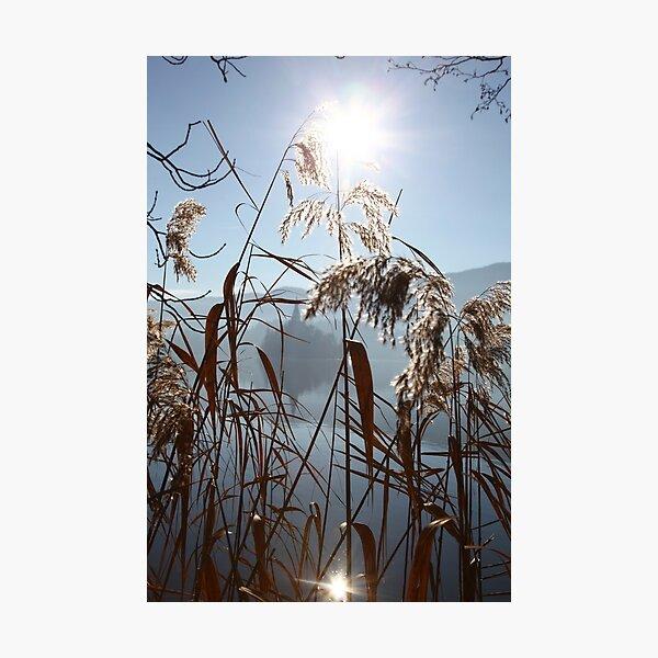 Misty Reeds Photographic Print