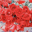 roses by Jessica Sharmin