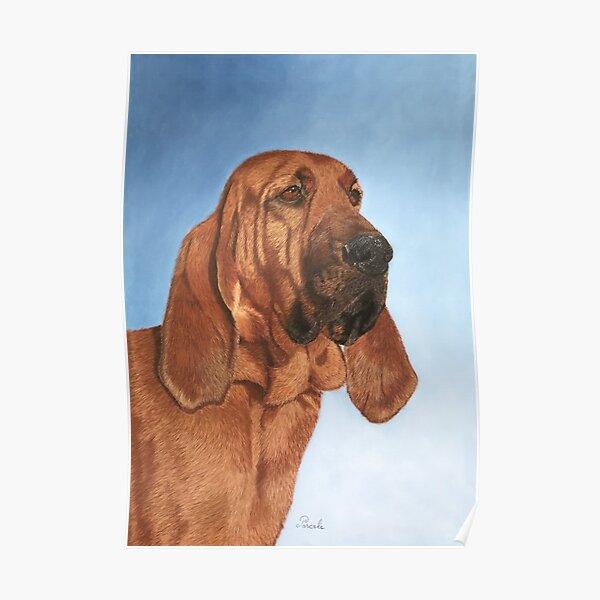 Bloodhound portrait, chien de Saint-Hubert Poster