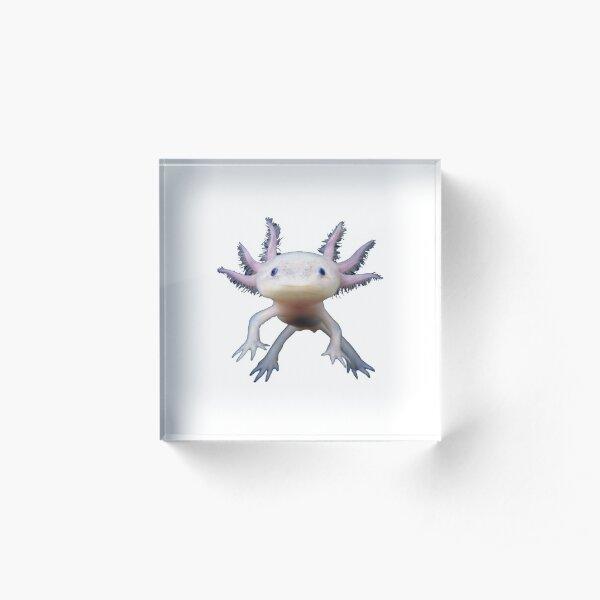 Axolotl Cute Funny Fish Amazing Ambystoma Mexicanum Acrylic Block
