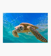 Green Turtle in Magical Water Photographic Print