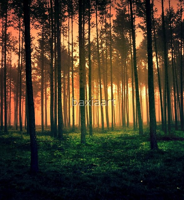Dark forest 01 by baxiaart