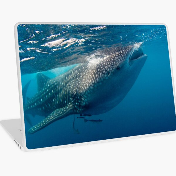 Whaleshark Laptop Skin