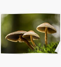Autumn Mushrooms in the Woods Poster