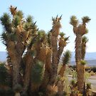Cactus at Silver Reef Mines  by goldnzrule