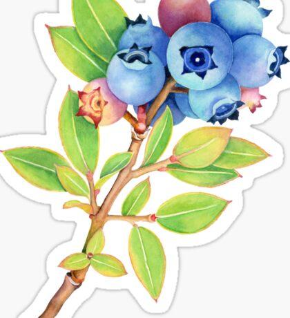 Wild Maine Blueberries Sticker
