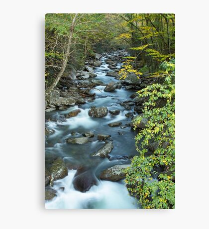 West Prong Little Pigeon River  Canvas Print