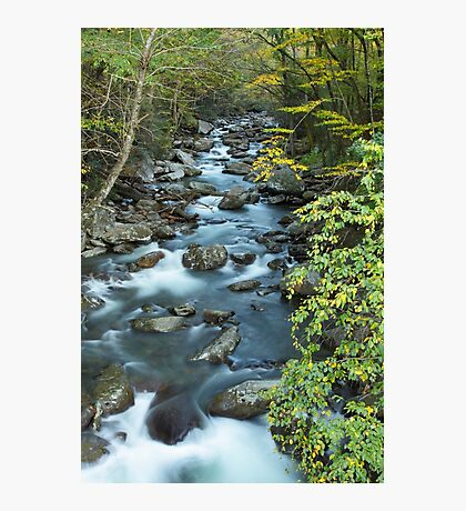 West Prong Little Pigeon River  Photographic Print