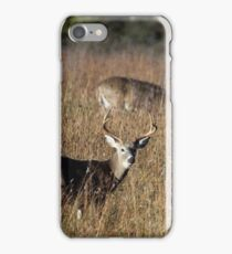 odocoileus virginianus iPhone Case/Skin