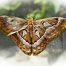 Butterfly by Bente Agerup