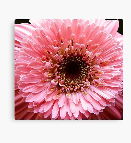 In the Pink!! Canvas Print