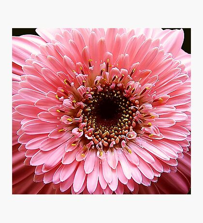 In the Pink!! Photographic Print