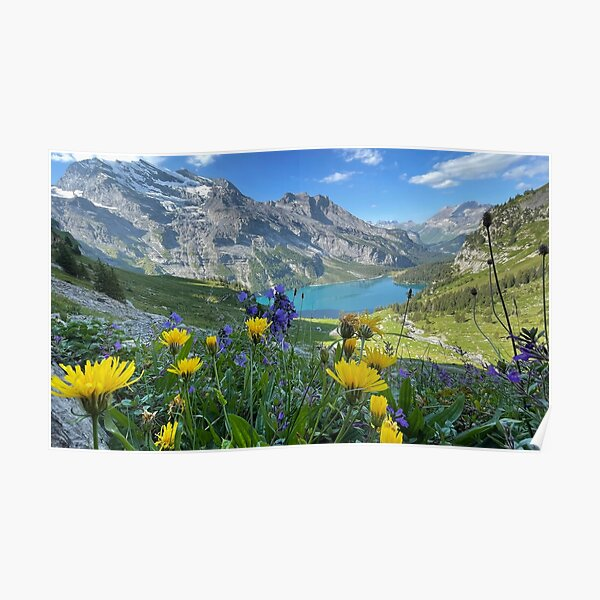Wildflowers in the Swiss Alps Poster