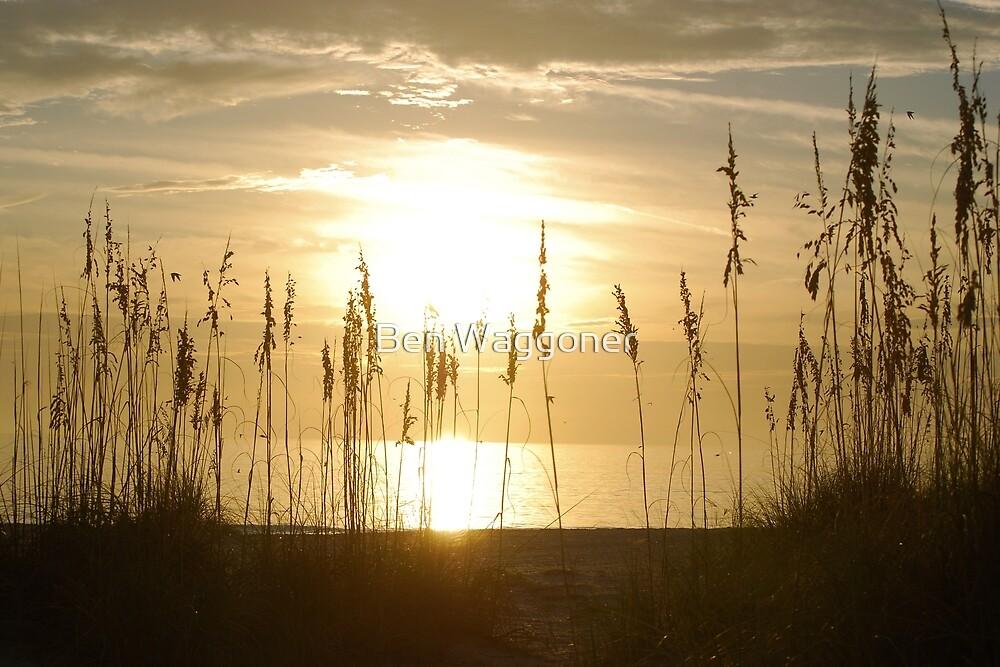 Sunset through sea oats 2 by Ben Waggoner