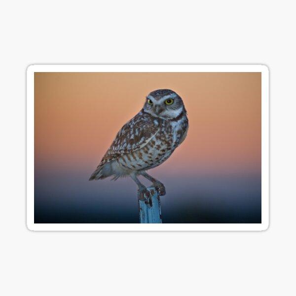 Burrowing Owl at Dusk Sticker