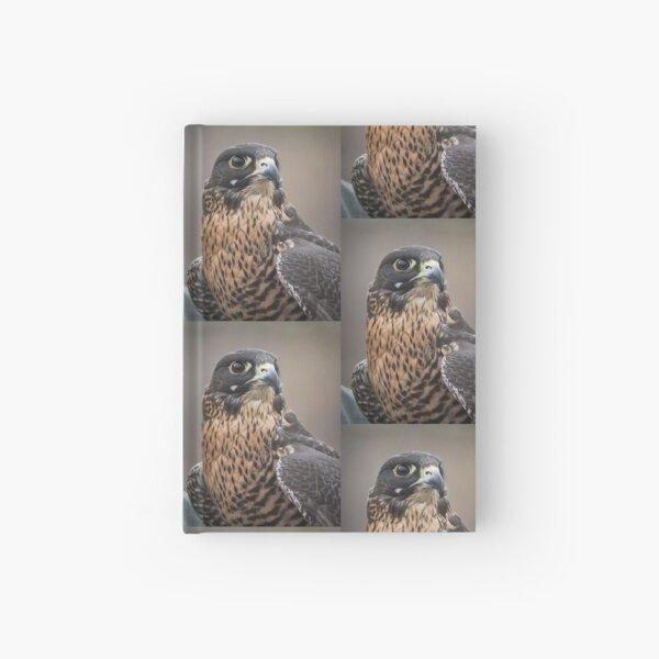 Peregrine Falcon Portrait Hardcover Journal